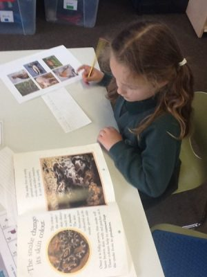 using non fiction texts to research